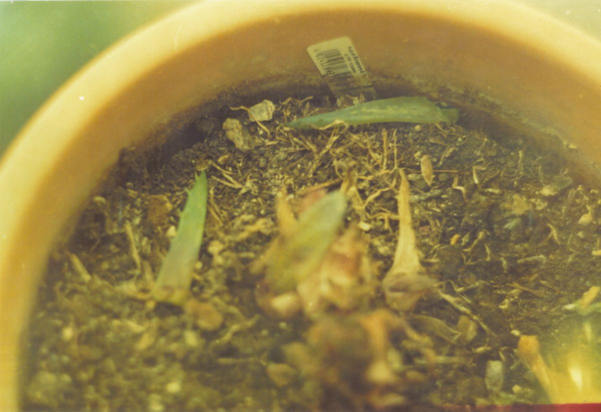 Aloe-Torf