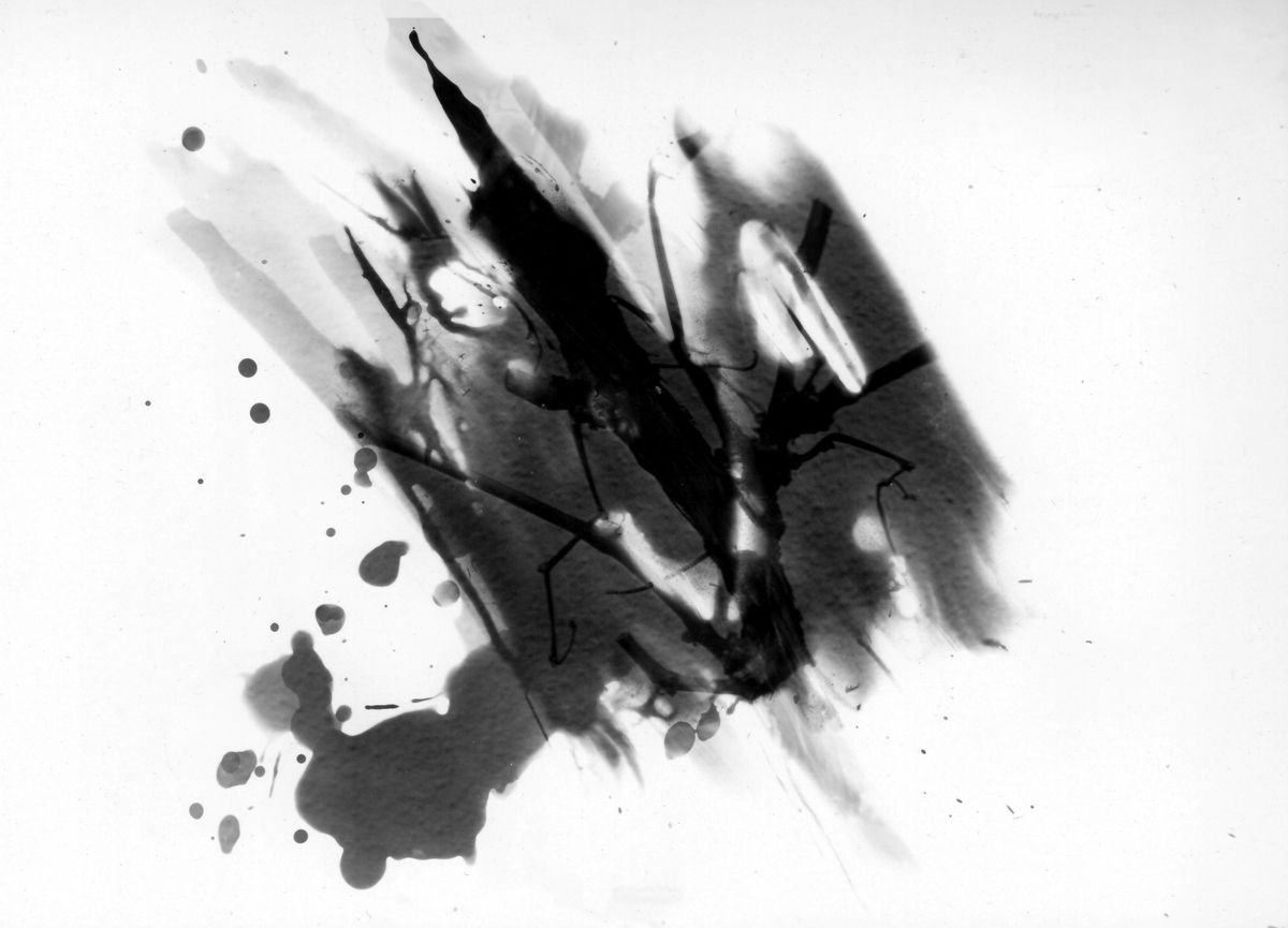 Dunkelkammerkreativität(en) No.01