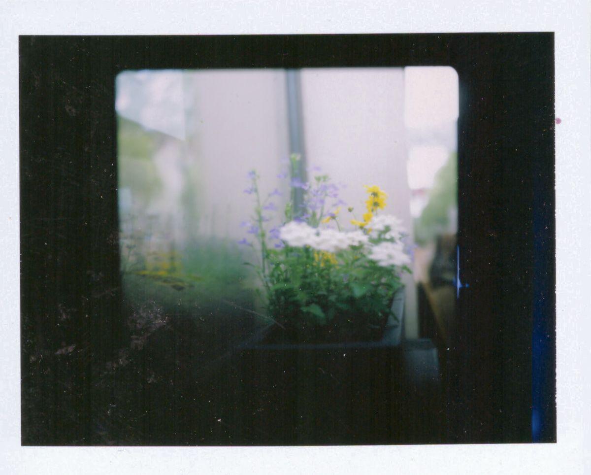 Florale Impressionen auf Sofortbild
