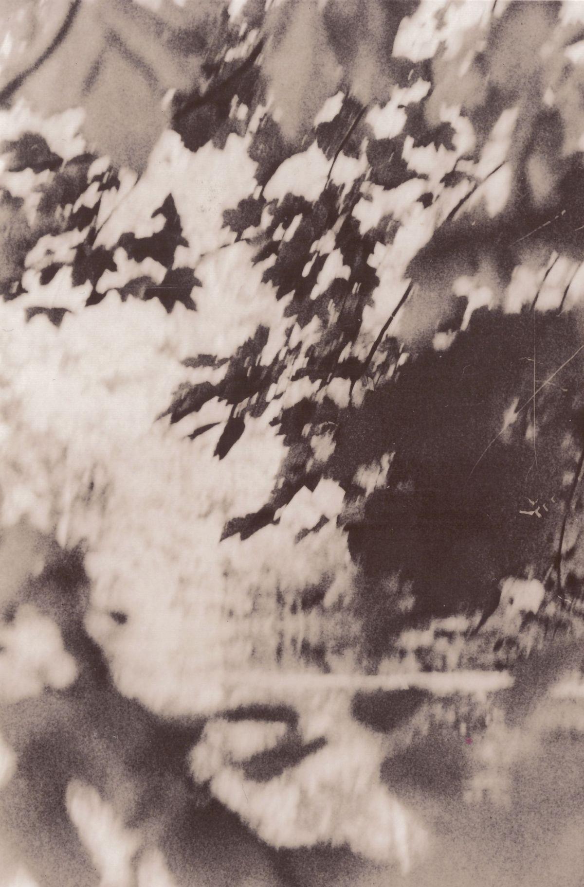 Im Wald von Taucha, letzte Galerie