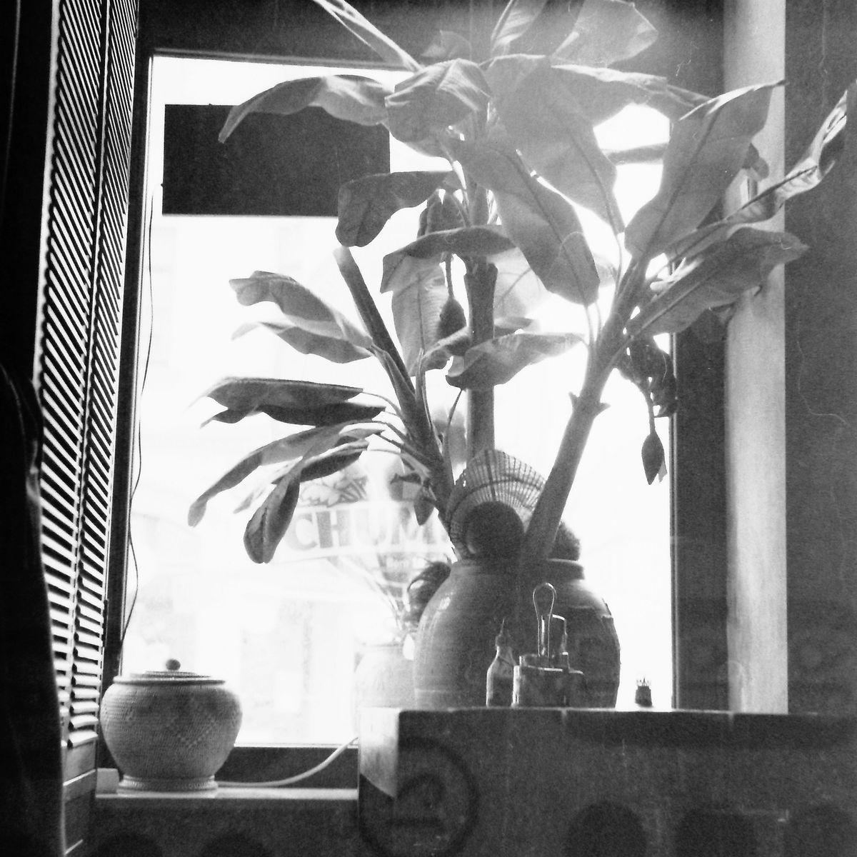 Die Pflanzen von Hipsterhausen