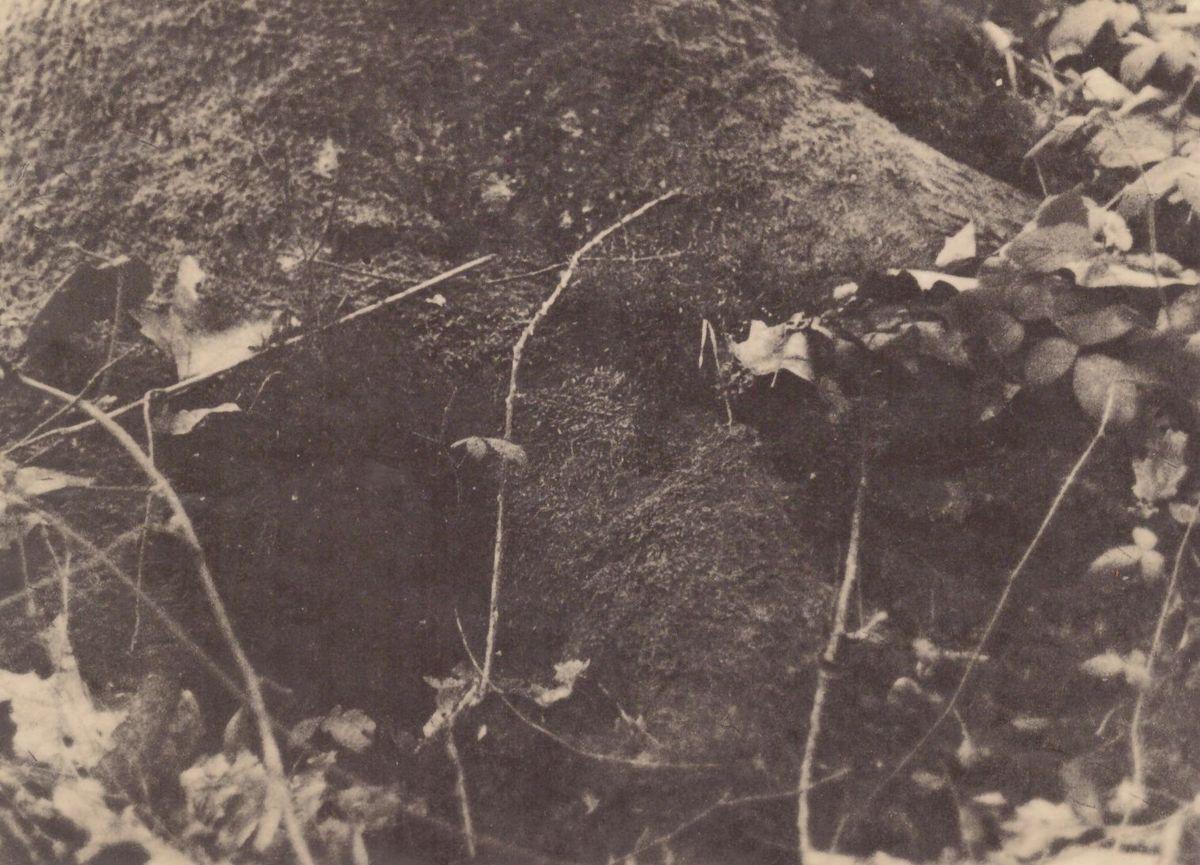 Geschichten auf Dokumentenpapier (ORWO) – der Odenwaldfilm